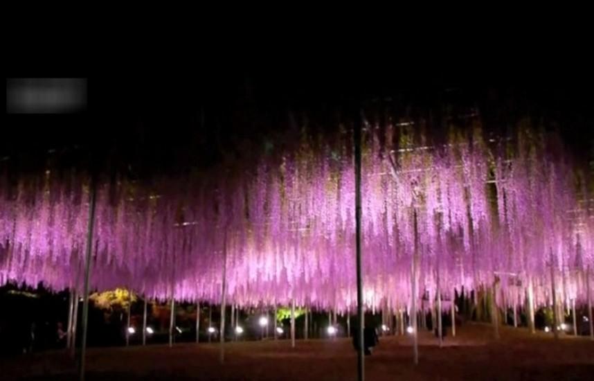 arbore