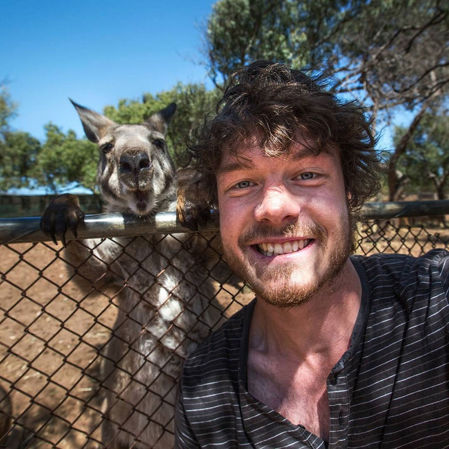 179055-880-1451151041-funny-animal-selfies-allan-dixon-12