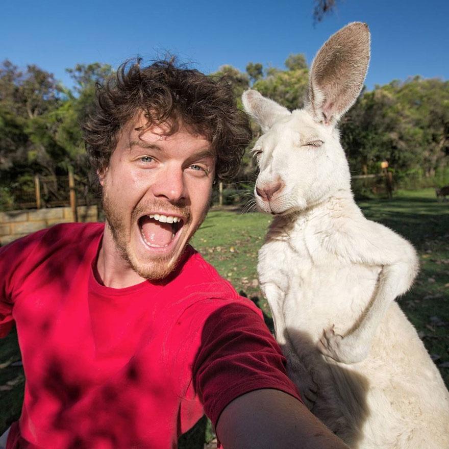 179105-880-1451151041-funny-animal-selfies-allan-dixon-11