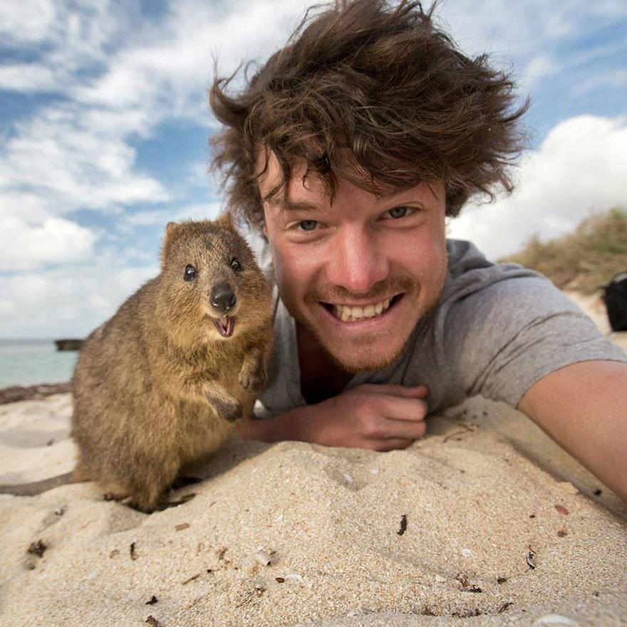179605-880-1451151041-funny-animal-selfies-allan-dixon-13