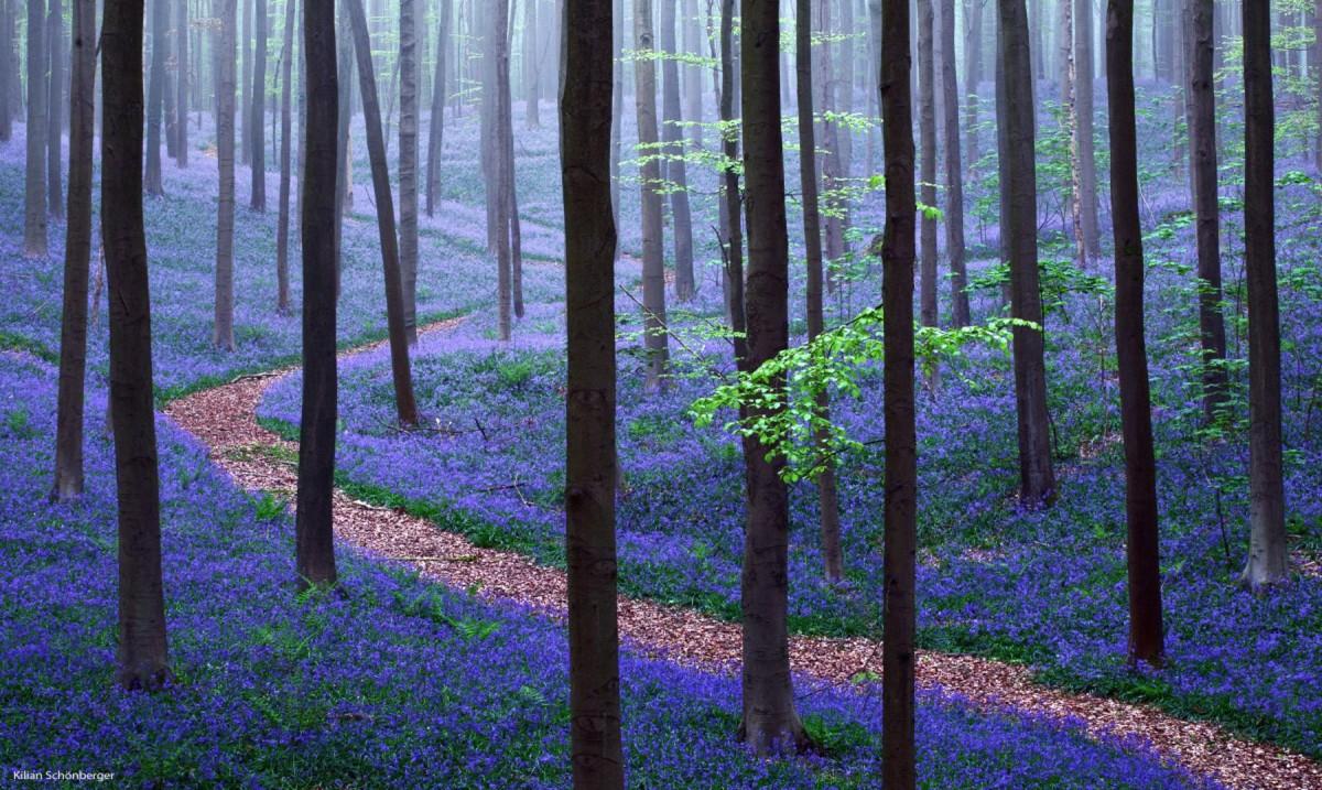 Acestea sunt cele mai frumoase paduri din lume. O galerie foto splendida cu cele mai minunate peisaje forestiere.