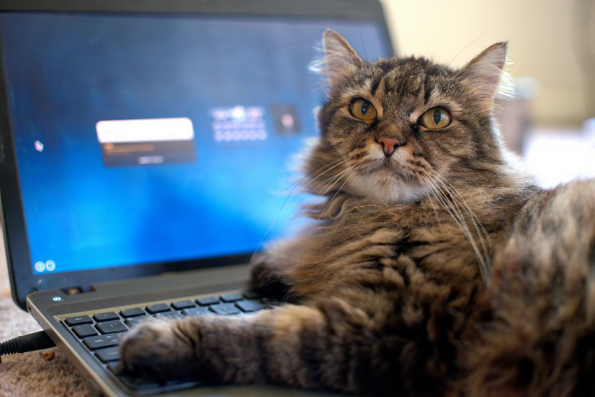 Cand au adoptat aceasta pisica habar nu au avut ca este atat de diferita