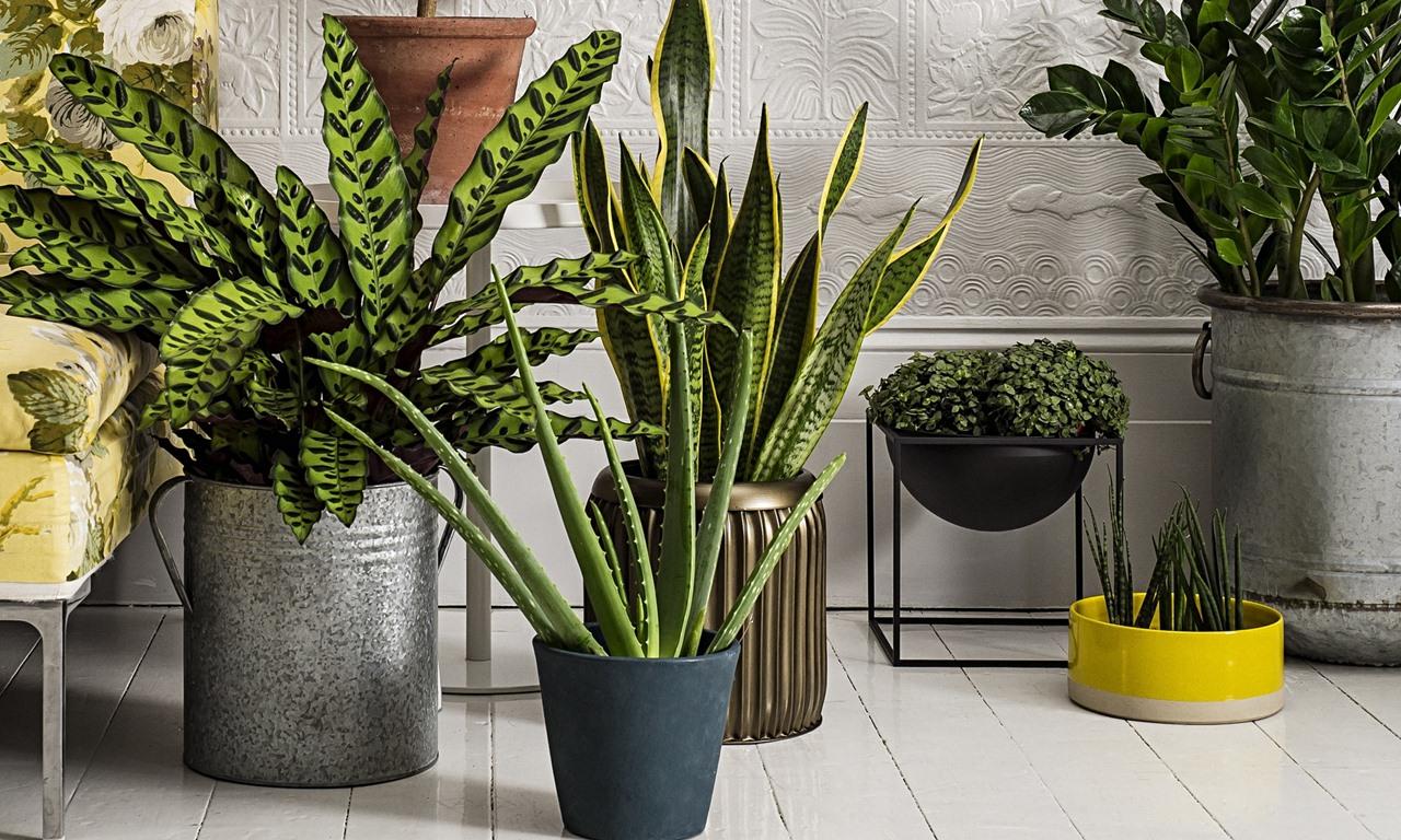 Trebuie sa ai aceste plante in casa daca vrei sa dormi bine