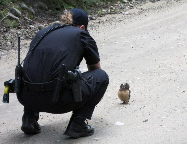Un pui de bufnita a devenit vedeta pe Internet dupa ce a reusit sa opreasca o masina de politie!