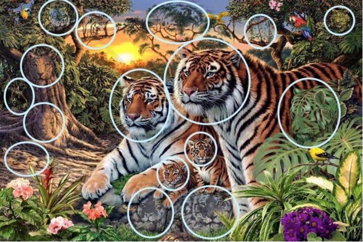 tigri rezolvare