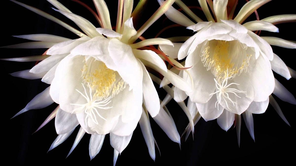 Florile reprezinta cel mai frumos dar oferit de natura. Unele exemplare sunt foarte frumoase, dar greu de gasit. Iata care sunt cele mai rare flori din lume