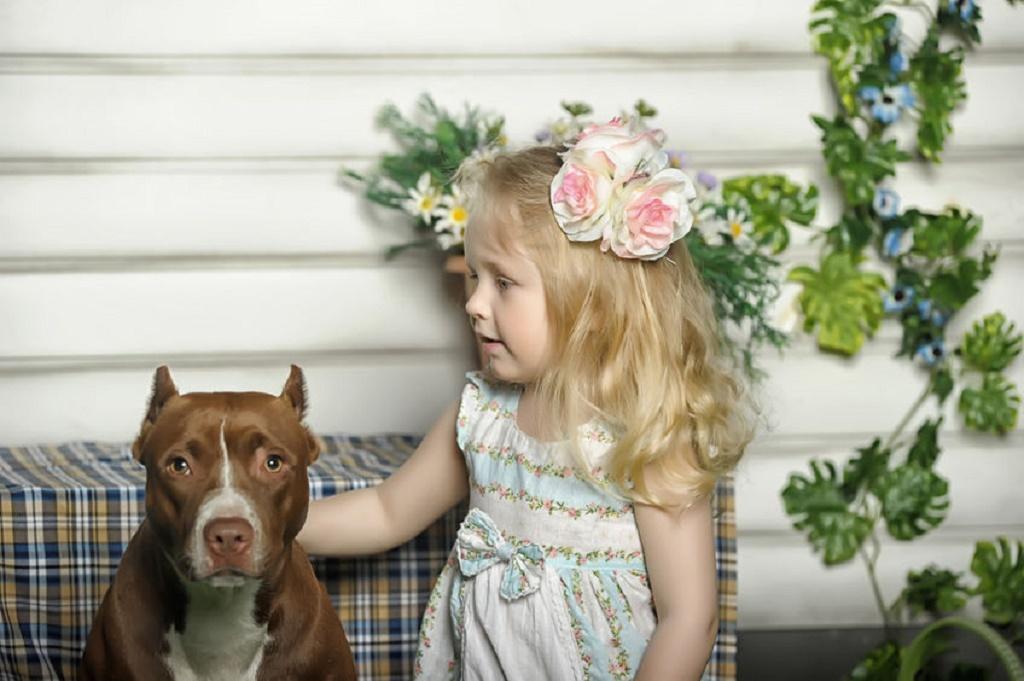 Ce a facut un pitbull pentru o fetita l-a marcat pe viata pe tatal ei