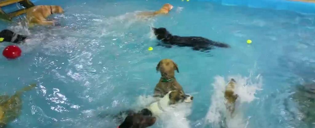 Ce se intampla intr-o piscina asaltata de caini