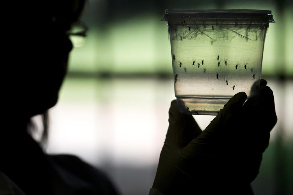 Al doilea caz de Zika in Romania - victima, un copil de 10 ani
