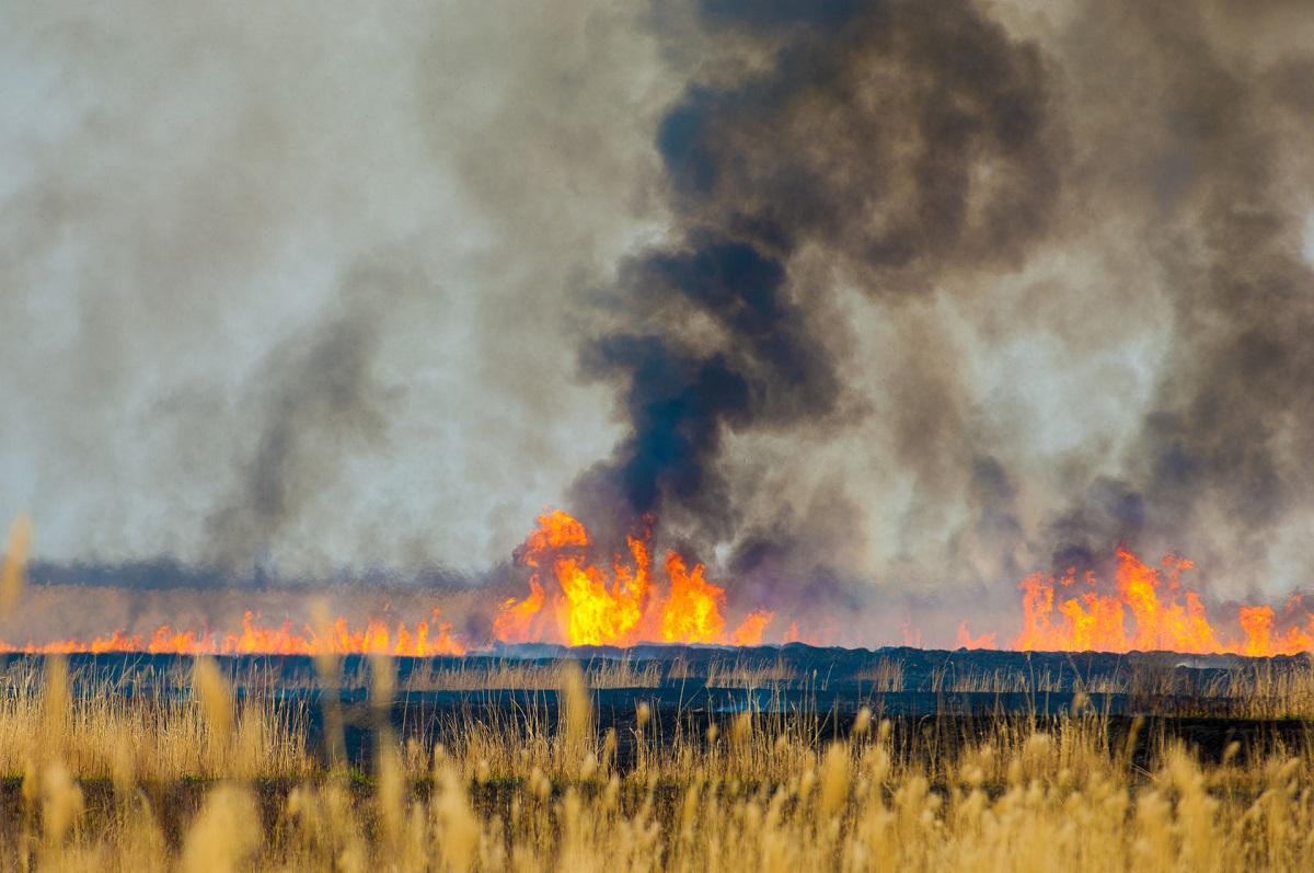 Incendiu de vegetatie in Vaslui