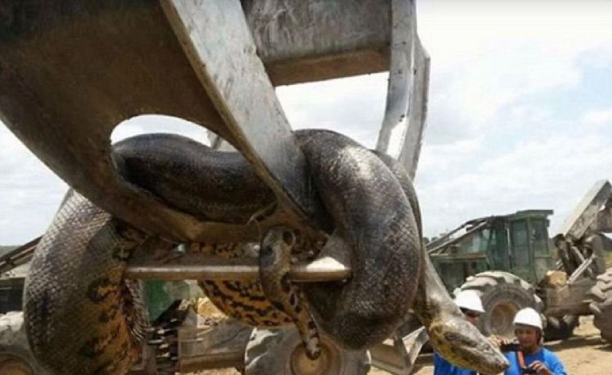 Cel mai mare șarpe din lume, descoperit în Brazilia