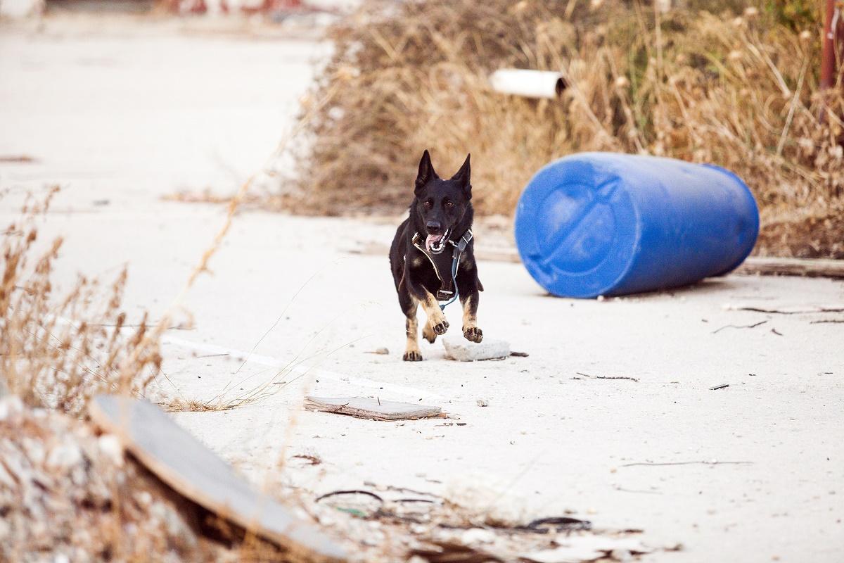 Un băiețel de opt ani din Dâmbovița a fost atacat de un câine lup. Incidentul s-a produs în fața magazinului părinților săi.