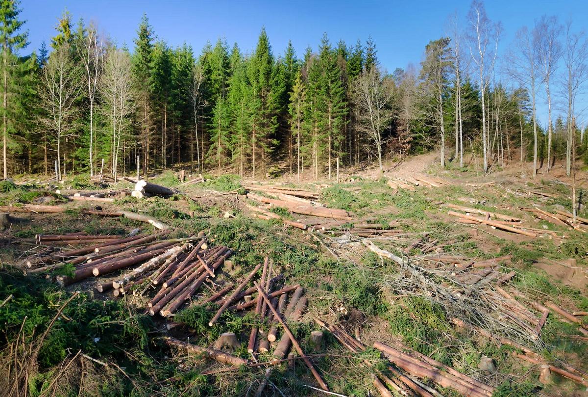 Tăierile ilegale de pădure vor putea fi depistate prin satelit mulțumită unui sistem inovator prin care autoritățile vor putea vedea unde se defrișează.