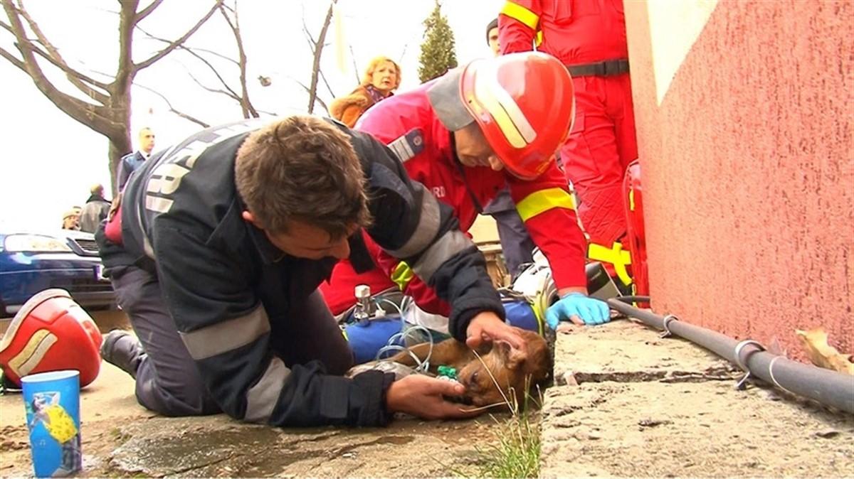 Câinele salvat dintr-un incendiu produs la un bloc din Pitești a murit. Anunțul a fost făcut de pompierul Mugurel Costache, cel care l-a resuscitat.