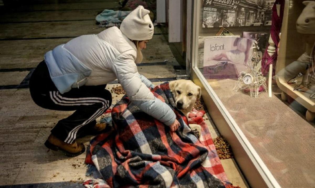 Câinii maidanezi din Turcia nu au fost lăsați să doarmă în ger. Ce au făcut oamenii pentru a proteja patrupedele de frig.