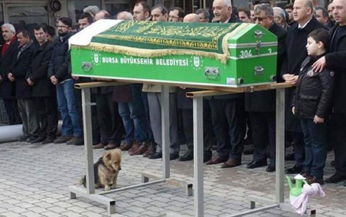 Povestea emoționantă a câinelui care își plânge stăpânul mort. Cesur merge în fiecare zi la mormânt și doarme.