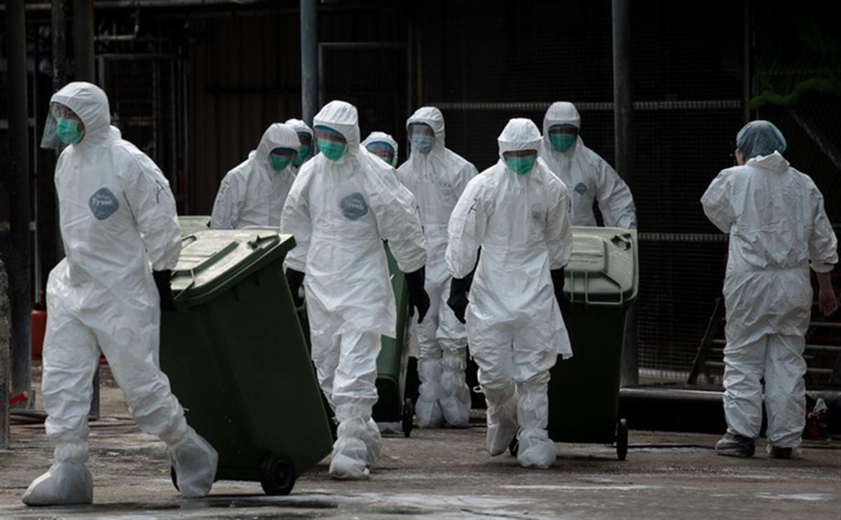 Gripă aviară la București. Primăria Sectorului 1 a constituit celulă de criză, după confirmarea virusului la cinci pescăruși morți.
