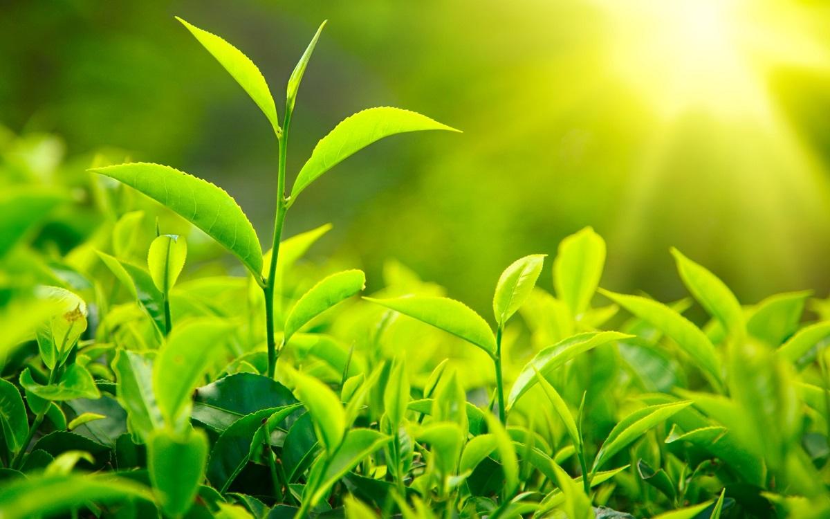 Un reputat profesor universitar susține că plantele pot vedea, pot mirosi și pot auzi, după lungii decenii în care le-a studiat.
