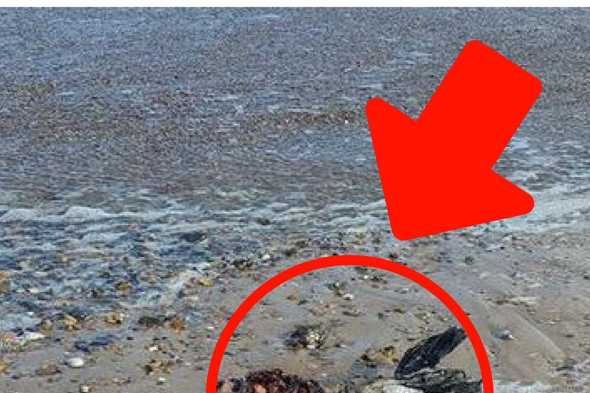 Se plimba liniștit pe plajă când a dat de CREATURĂ! Imediat a filmat totul!