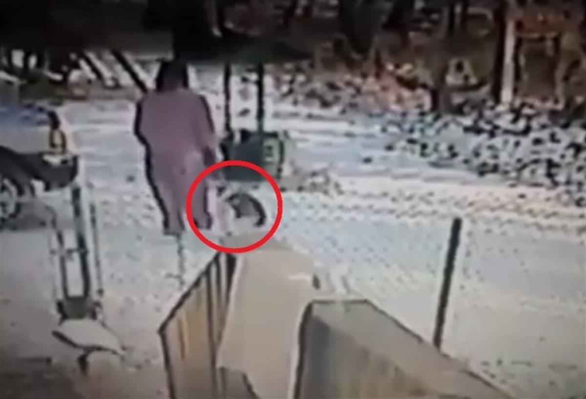 A vrut să chinuie pisica, dar tot răul s-a întors împotriva sa! Ce a pățit femeia din imagine!
