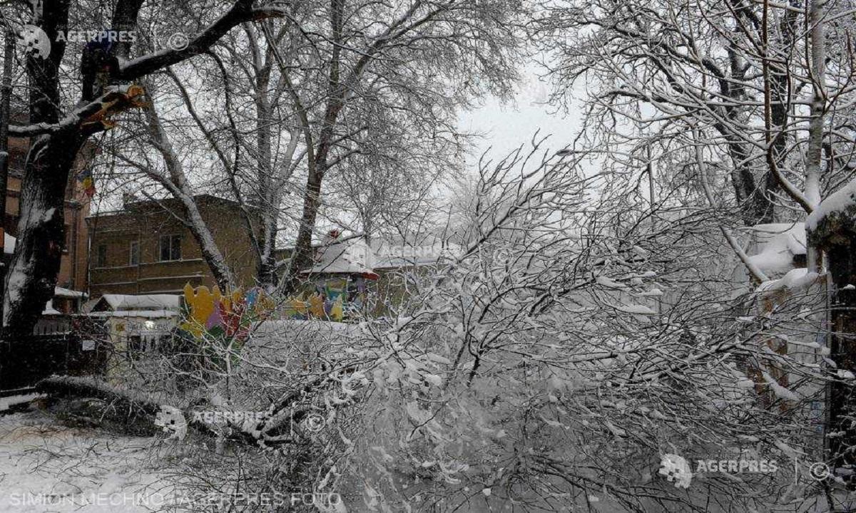 Copaci rupți de vânt în Bistrița-Năsăud. 5.600 de gospodării au rămas fătă electricitate