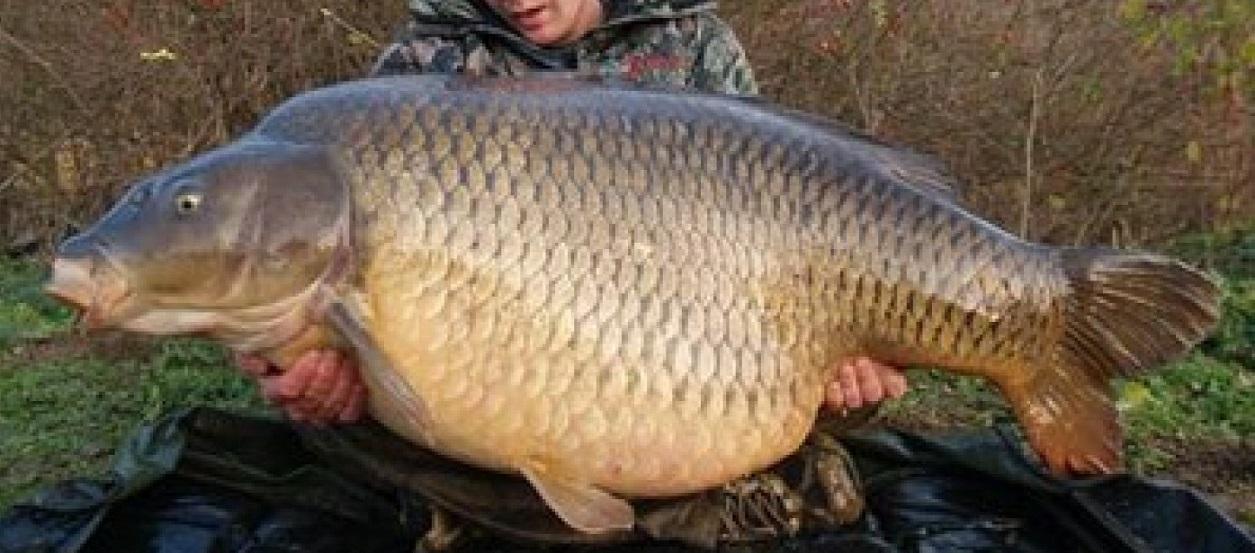 Un amator de pescuit a avut parte de un adevărat șoc după ce a prins un crap imens. Când l-a despicat nu i-a venit să creadă ce era în el.