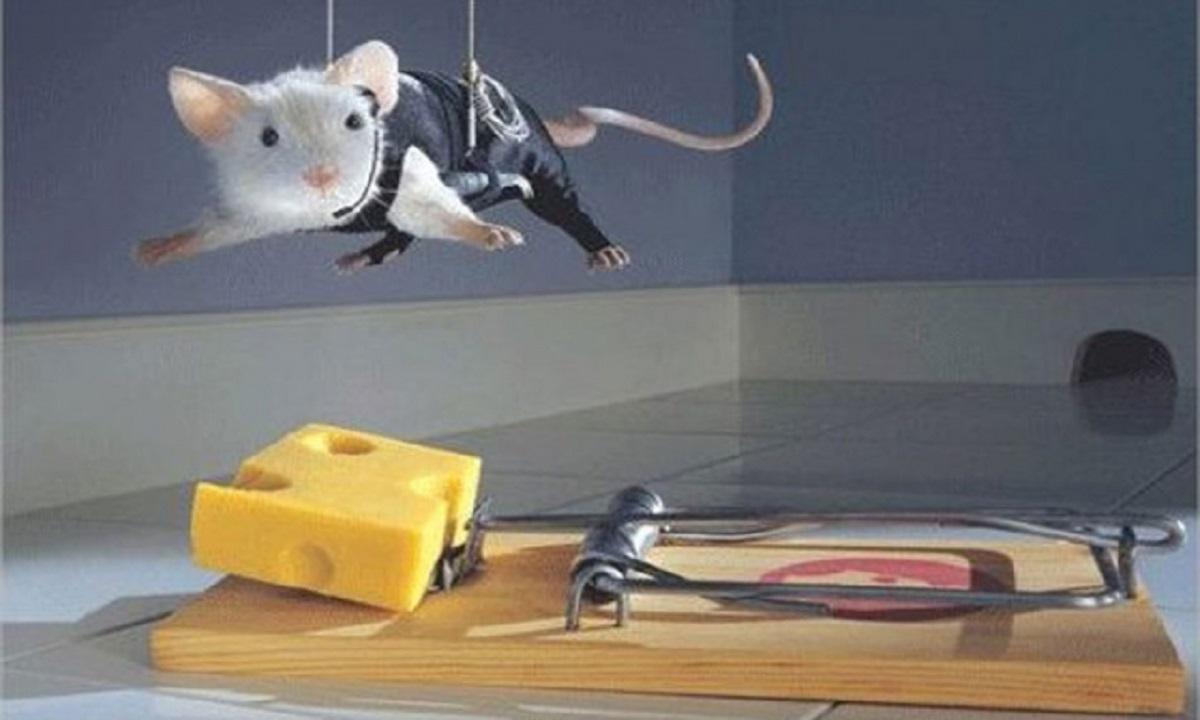 Bancomat jefuit de șobolani?!?