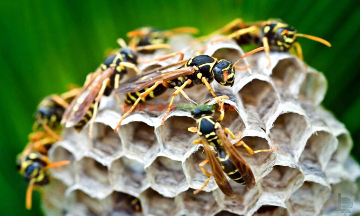 Sălaj: Un bărbat a decedat după ce a fost înţepat de mai multe viespi