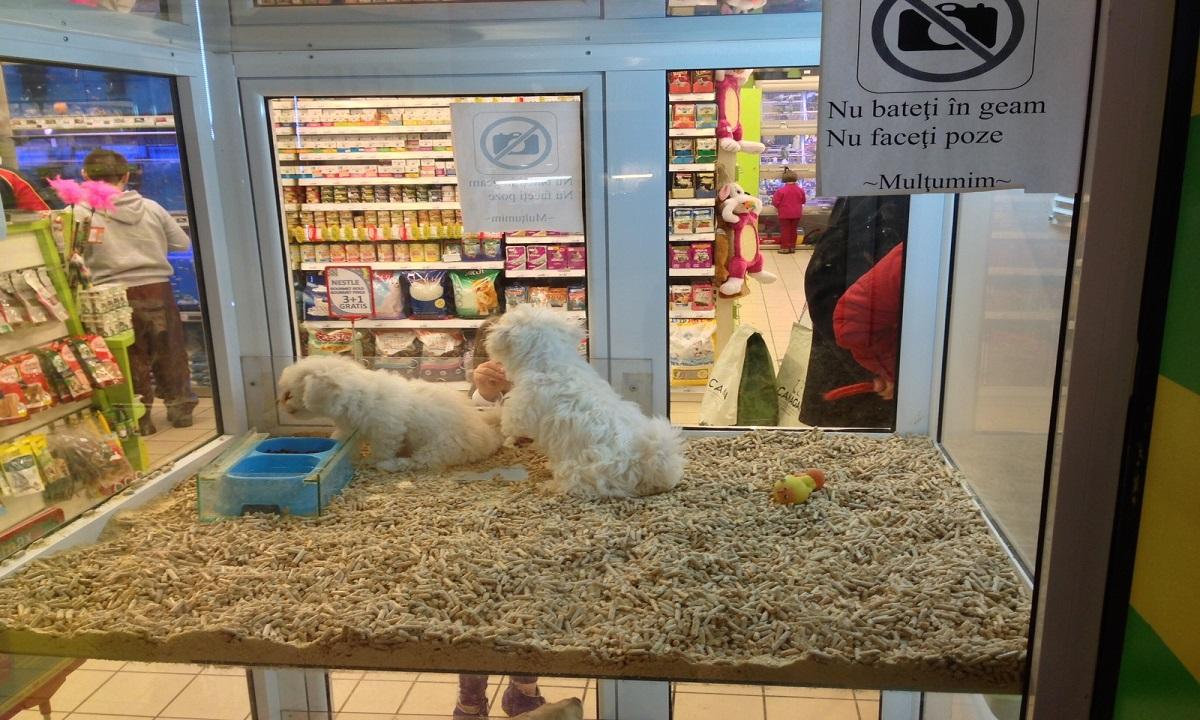 Lege! Vânzarea de câini şi pisici în pet shop-uri este interzisă!