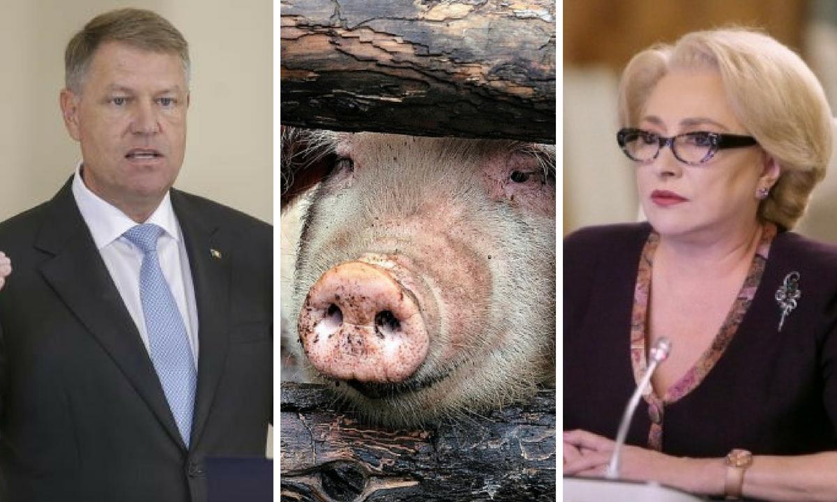 Președintele cere Guvernului măsuri concrete în cazul pestei porcine. Ce spune Viorica Dăncilă