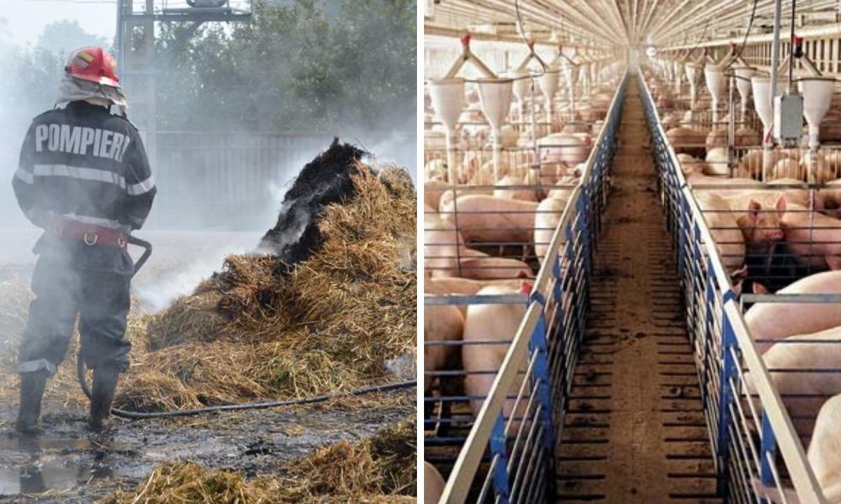 Incendiu la Tichilești, la o fermă de porci. Reacția ISU Brăila