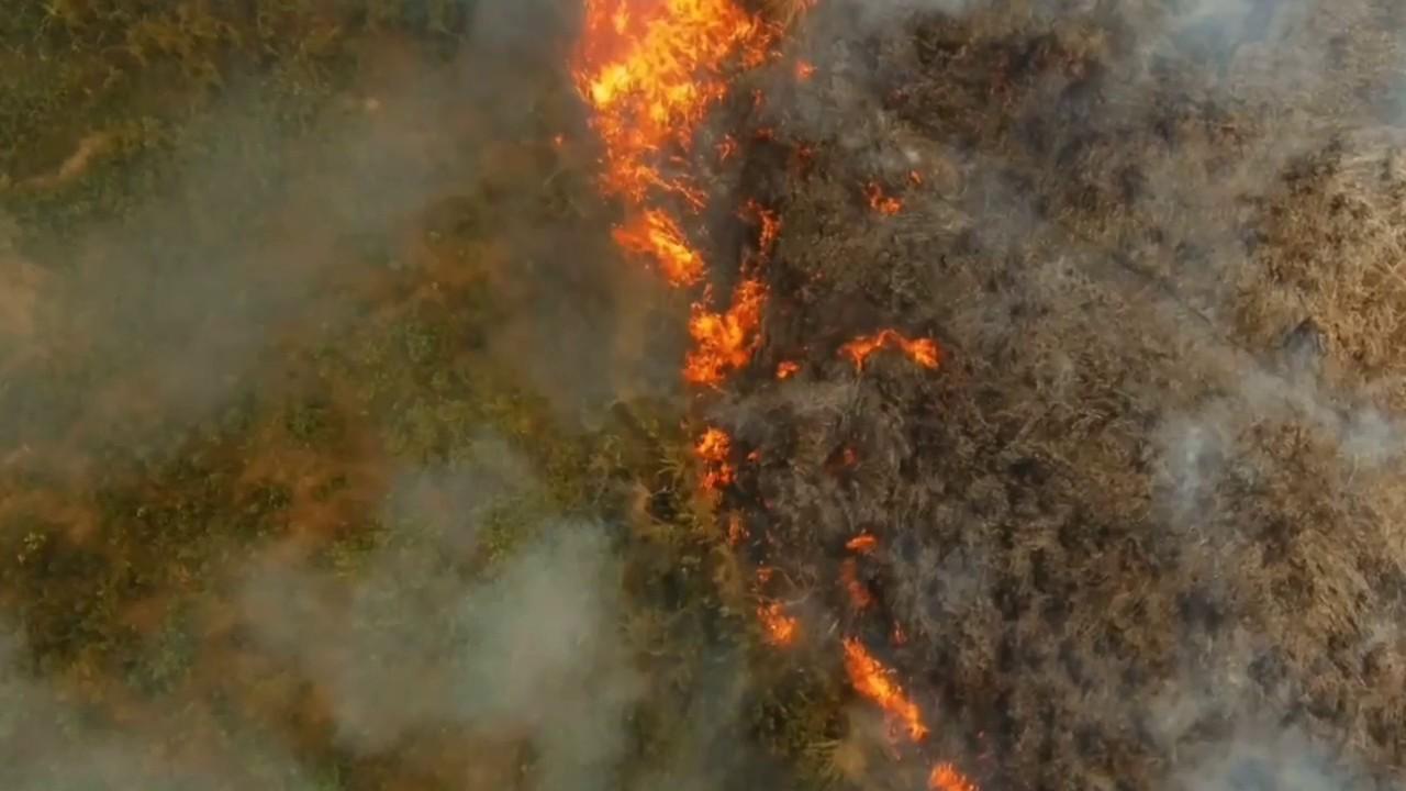 Cea mai mare padure din lume arde in ritm alarmant