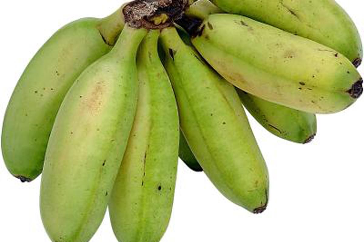 Cel mai cunoscut fruct este in pericol. Știința poate rezolva problema