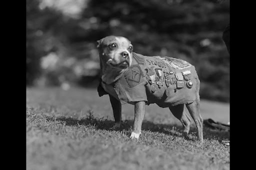Povestea lui Stubby, câinele-soldat