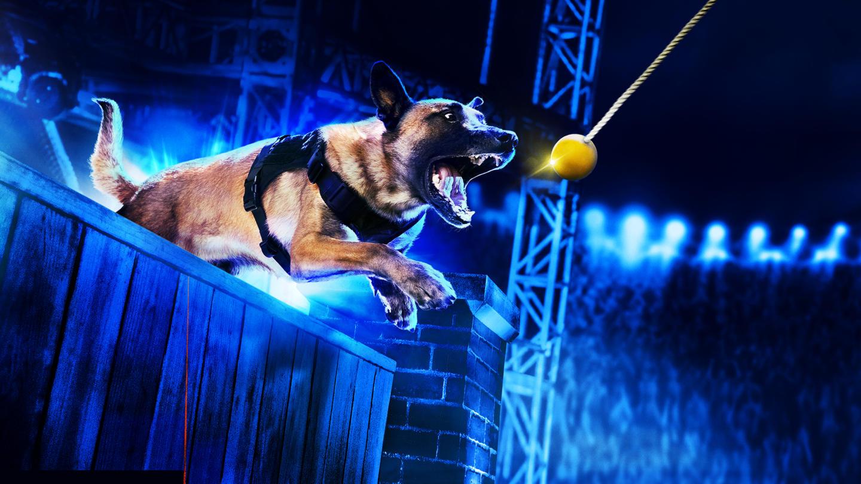 """HISTORY transmite în exclusivitate serialul-concurs """"Câini Polițiști de Top"""""""