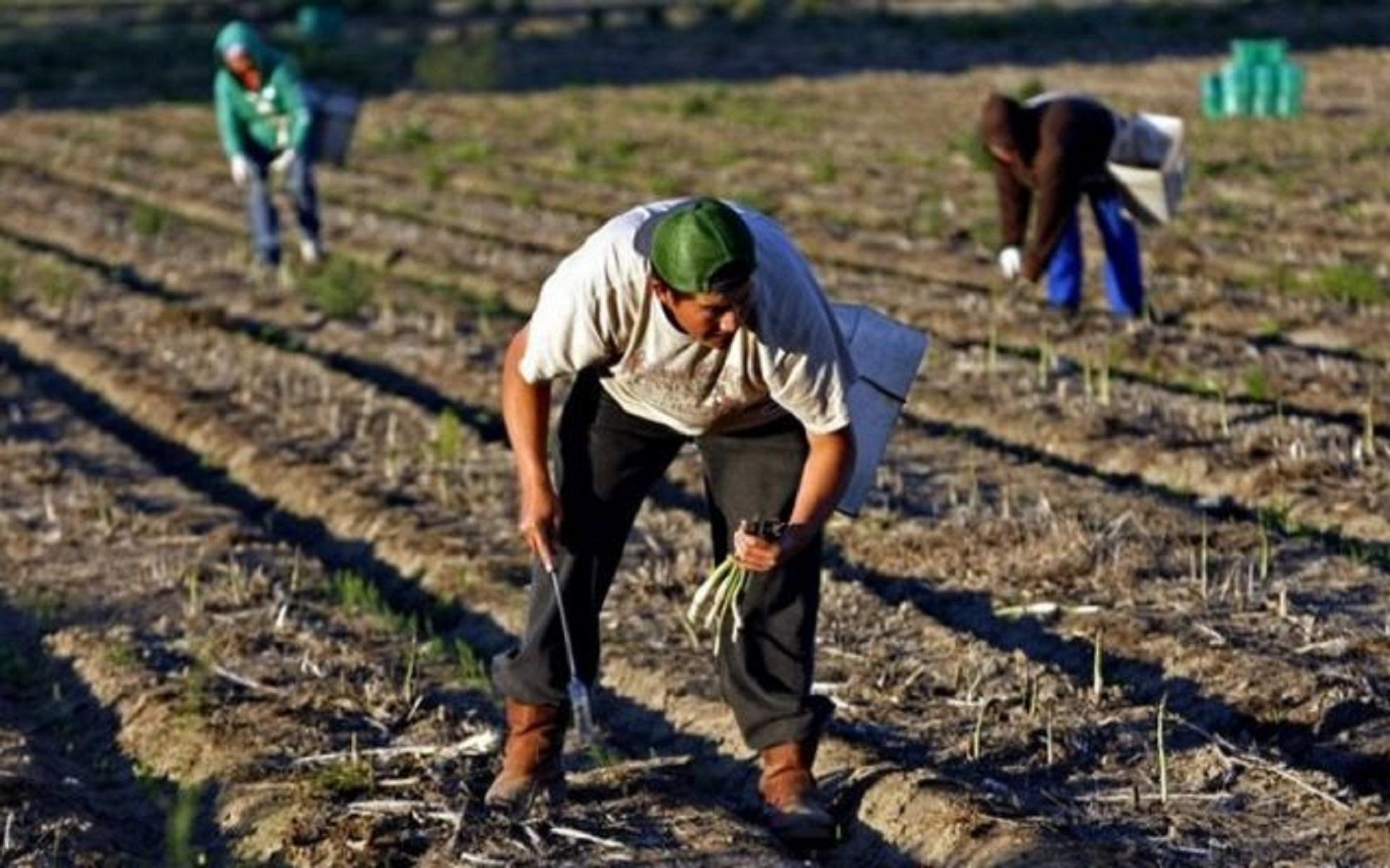 Muncitorii sezonieri din Europa: ce se va întâmpla cu ei? Parlamentul European ia decizia