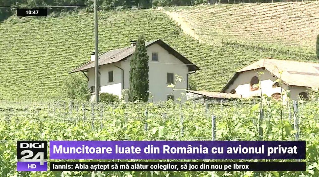 Un patron Italia de plantatii de vie si-a adus 8 romance la munca cu avionul privat