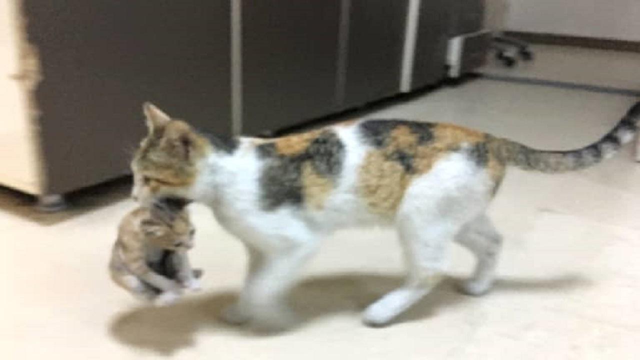 Poza care a făcut înconjurul lumii: o pisică și-a dus copilul bolnav la spital, medicii au plâns când au văzut