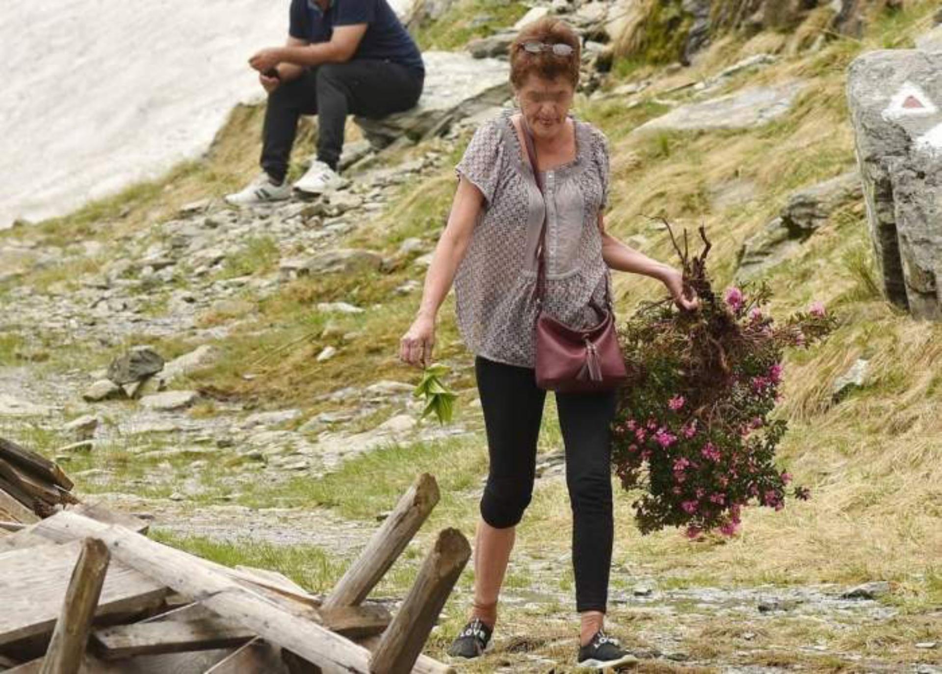 Mesaj dur de la salvamontiști după ce o turistă a smuls din rădăcini o plantă protejată de lege
