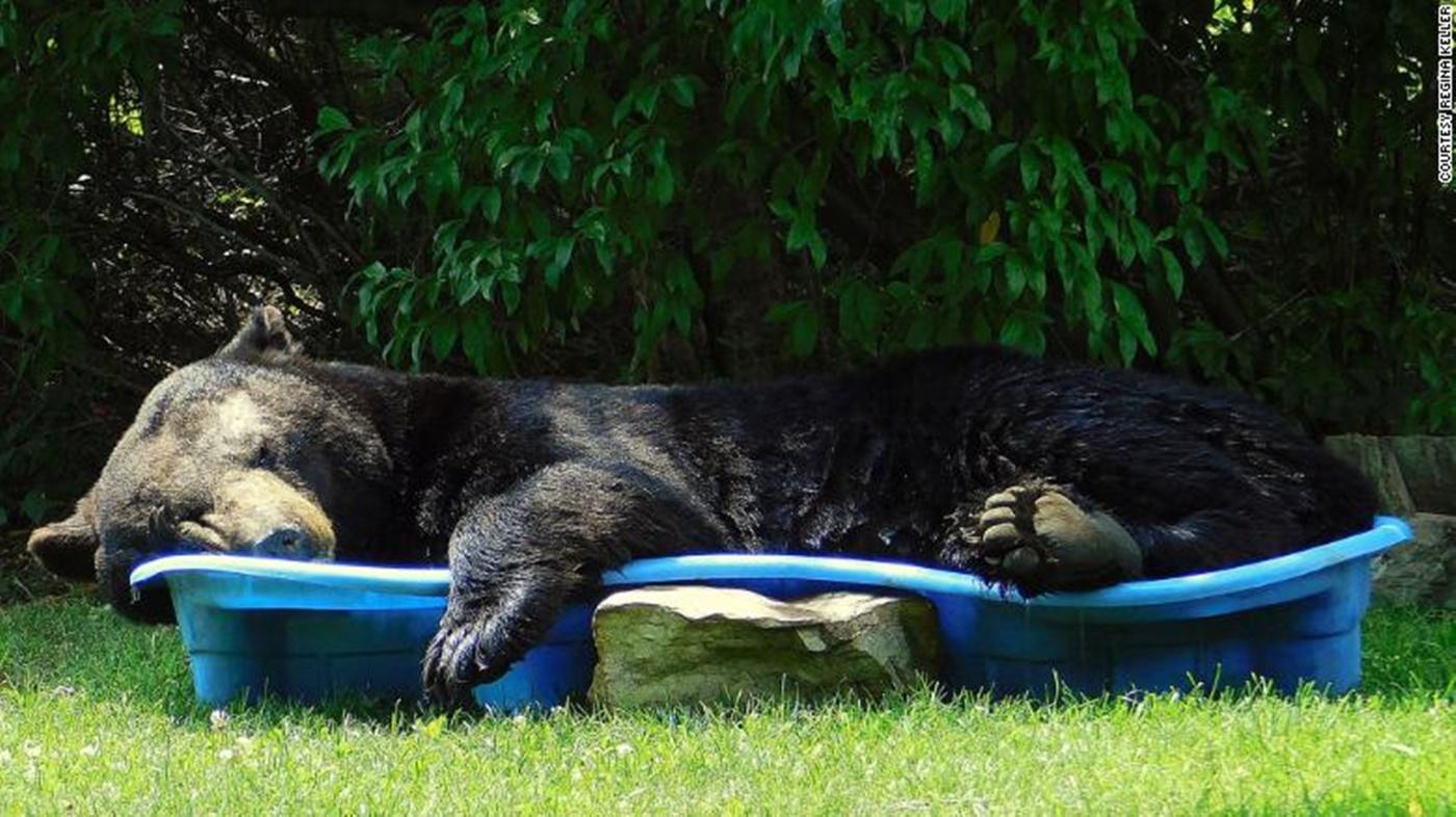 Urs filmat când se relaxa într-o piscină pentru copii
