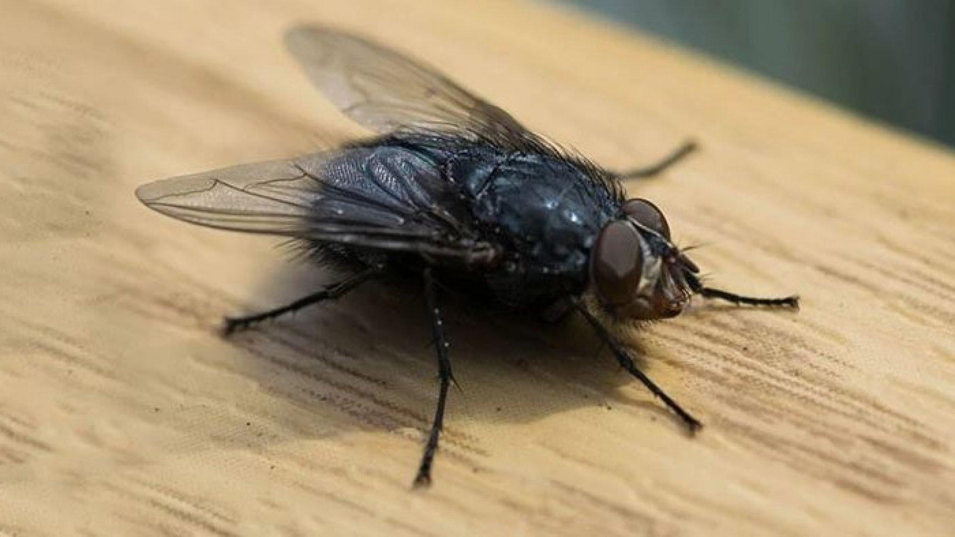 Și-a aruncat casa în aer încercând să prindă o muscă