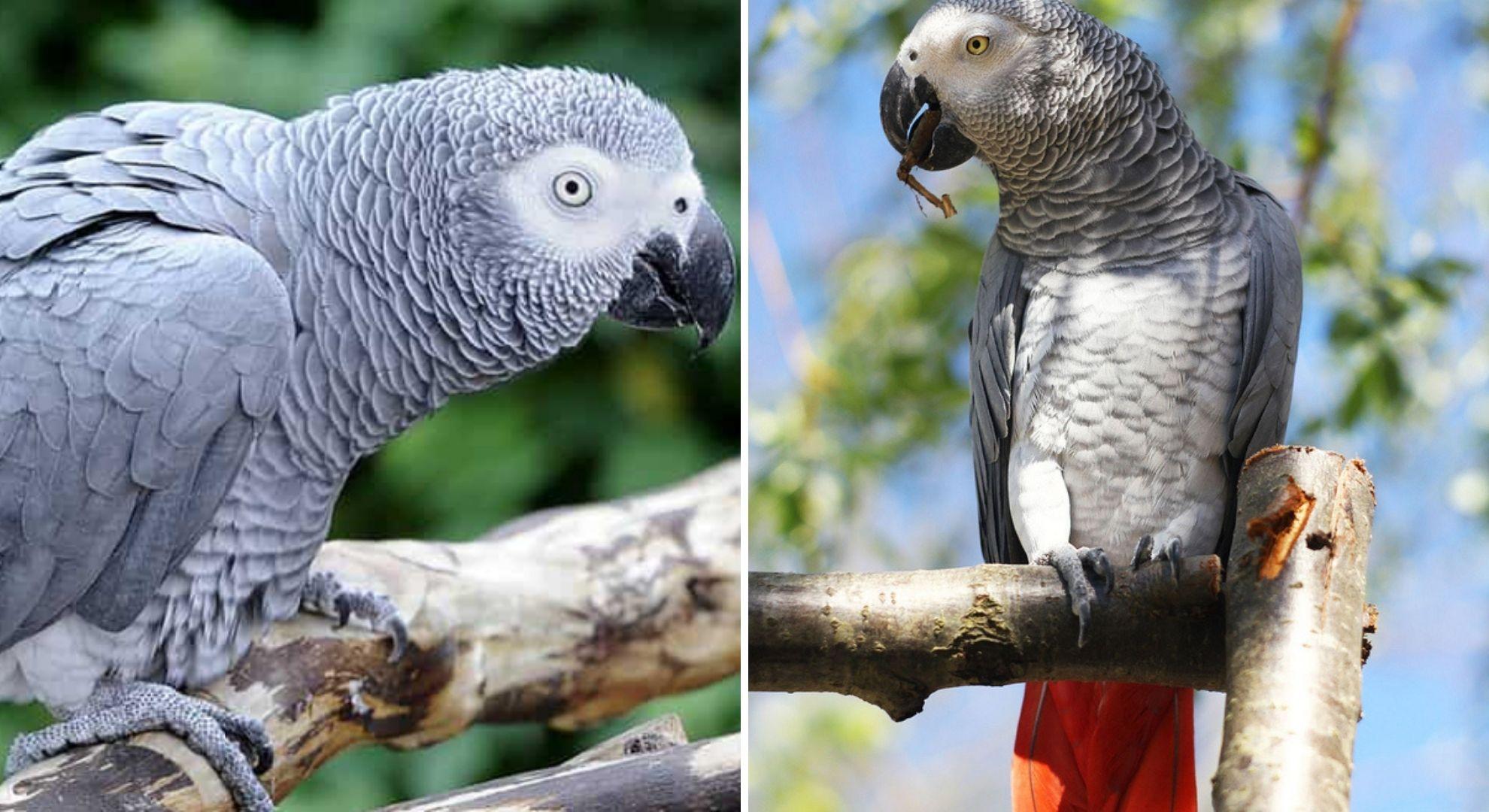 """Papagali de la ZOO, despărțiți pentru că înjurau prea mult: """"Când un papagal îți spune să te duci dracului..."""""""