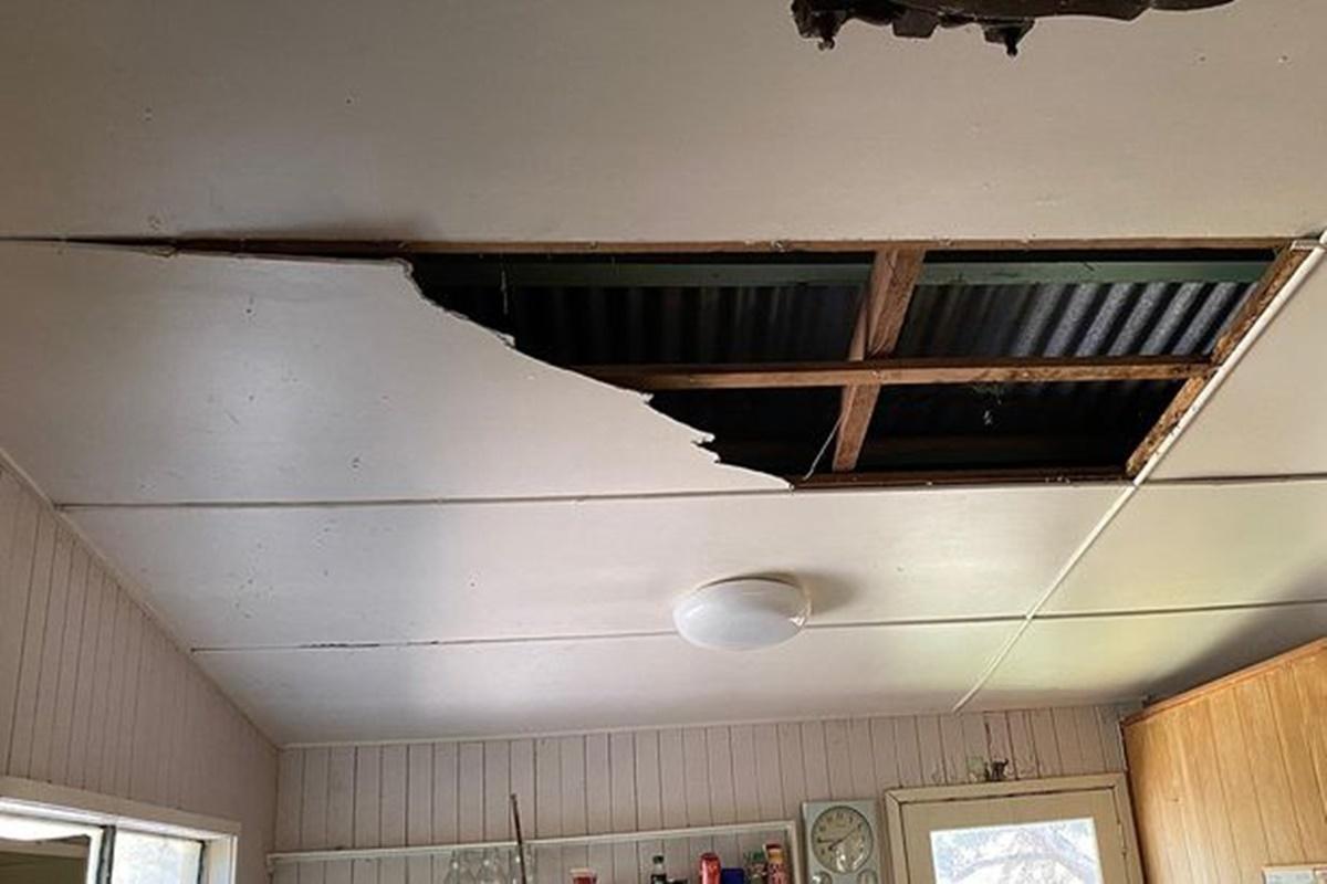 Un bătrân din Australia s-a trezit cu doi șerpi în sufragerie! Reptilele au căzut din tavan