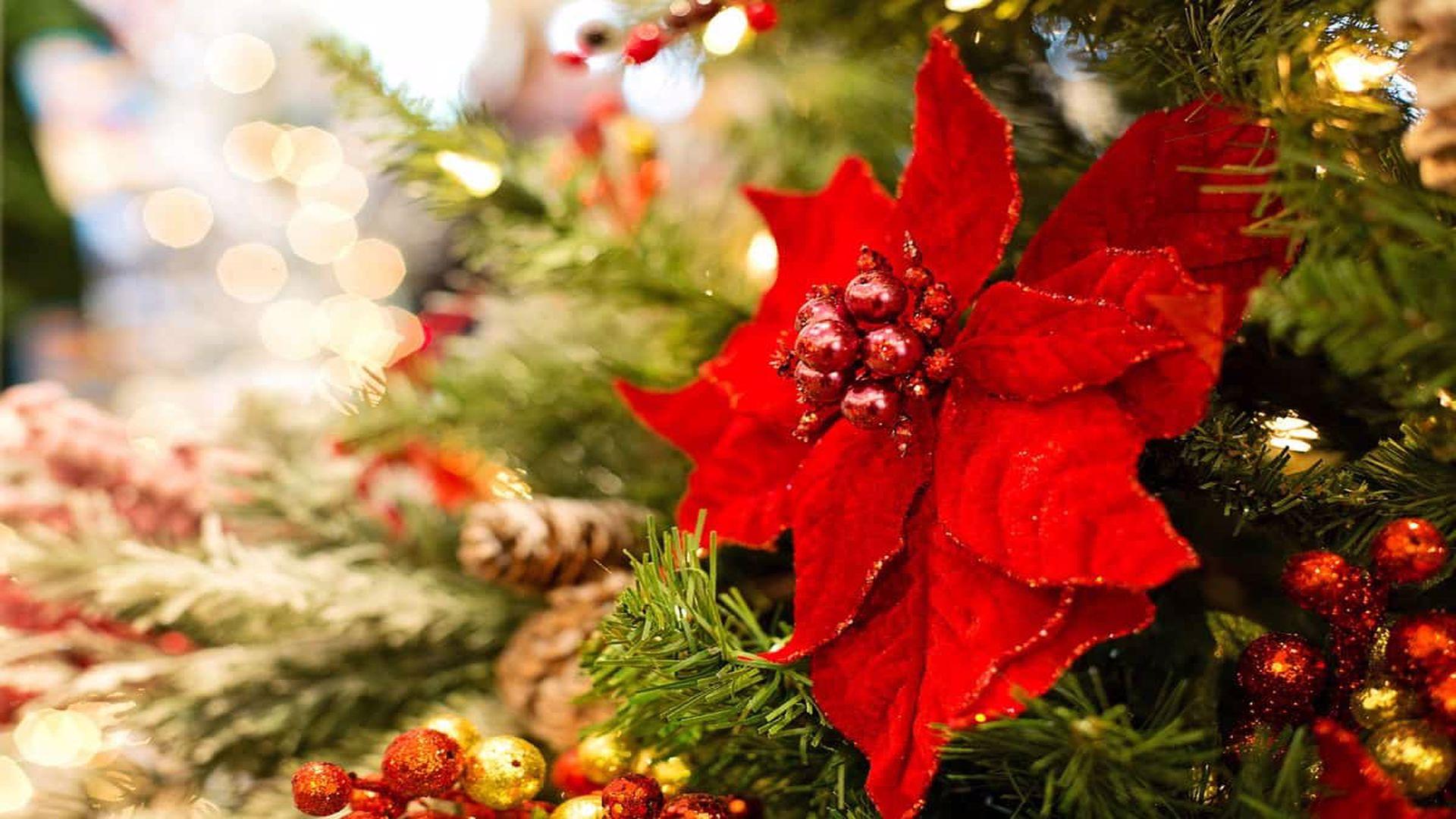 Superstiții în Ajun de Crăciun. Ce să nu faci sub nicio formă pe 24 decembrie