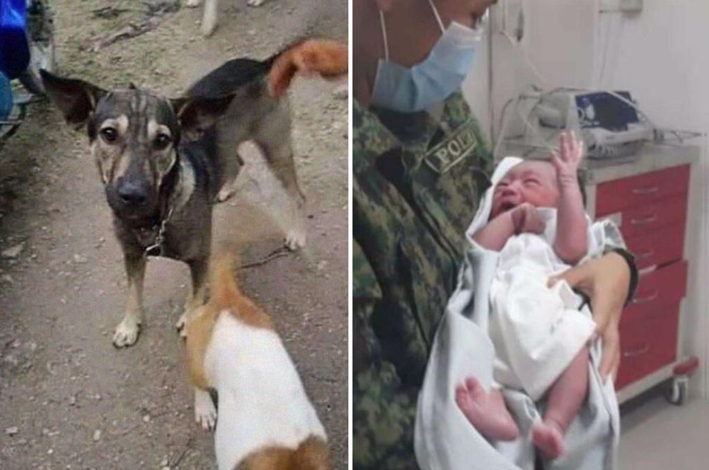 Lecție de viață de la un patruped: Bebeluș abandonat printre deșeuri, salvat de un câine