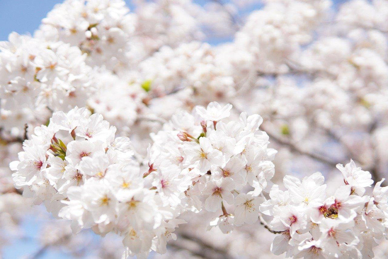 Horoscop ora 5 8 aprilie 2021. O zi de primăvară liniștită