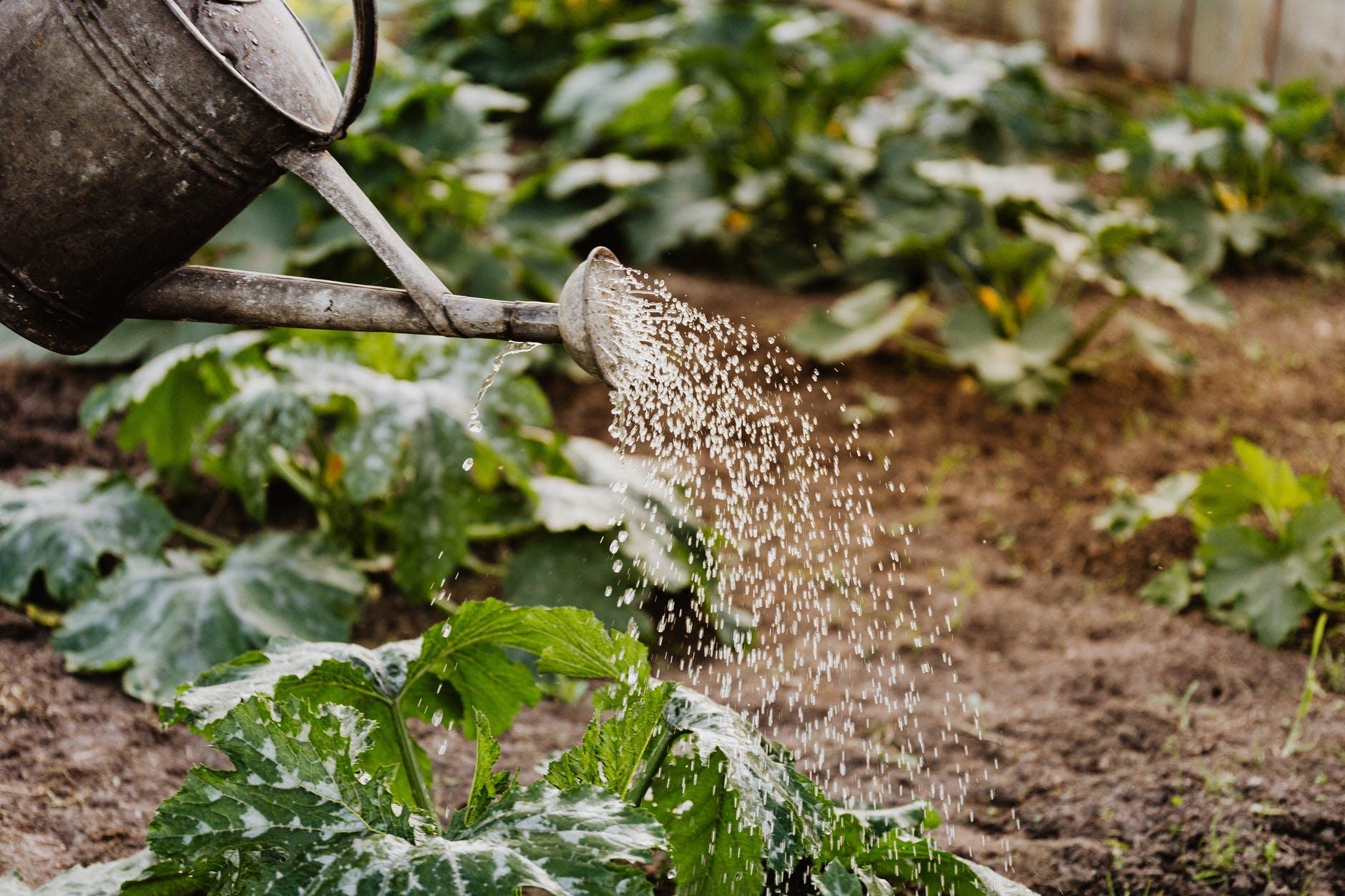Produse cu probleme sau cum eviți să plantezi fără succes. Sfaturile grădinarilor GrădinaMax